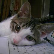 猫にIT -ITニュースブログ-