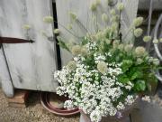 タミィとお庭と明日吹く風