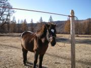 馬とモンゴル