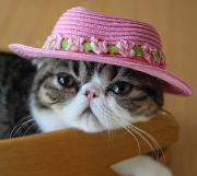 エキゾチックとペルシャ猫ちゃんの日々出来事♪