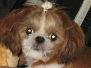 サバイ犬、ケンシロウの日記
