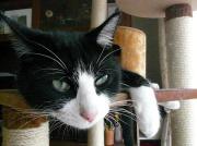 猫と料理と浦和レッズ
