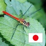 蜻蛉さんのプロフィール