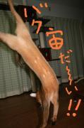 アビ(Ruddy♂)空太☆クータン♪