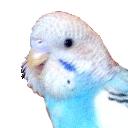 空の渡り鳥