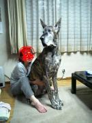 世界一背の高い犬のま〜君