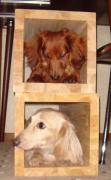 犬バカが贈るワンコの飼い方豆知識