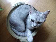 怪猫ガイド / 横浜からのお出かけガイド♪