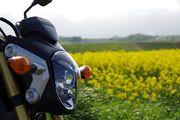 ウィンたんのバイクと写真日誌(*^ー^*)