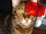 TOY'S星矢のまねき猫