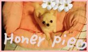 sweetie-honey