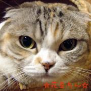 『銀平・花豆』通信