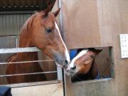 乗馬クラブ 体験乗馬日記