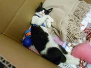 右手麻痺の子猫の里親探し(大阪市)