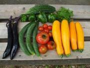 農家の息子の菜園blog