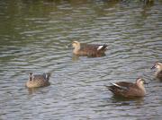 渡り鳥が結ぶ友和の会