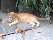 どら猫の猫集会