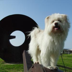 座敷わらし犬とうさぎガーデン