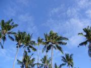 アジアの風 from Thailand