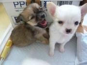 神戸愛犬さんのプロフィール