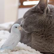 ほくのたこやき -猫とインコ-