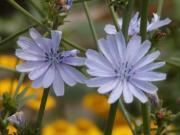 言葉の花かご