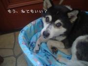 Chobita & Piitaro Day's* ぴいチョビ日記