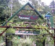Smoketree's Perennial Garden