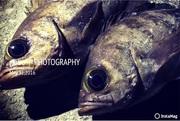 CAMPING FISH