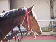 万馬券を演出するのは、この馬だ!!