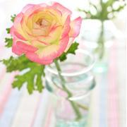 *Flower Photo*
