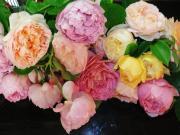 薔薇の奏でる小さな庭〜♫