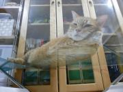 猫三昧♪〜セカンドハウス〜