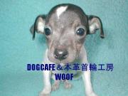 WOOF 犬CAFE&首輪工房 ウーフ