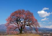 わに塚の桜 四季