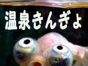 温泉金魚et cetera