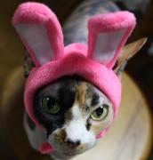 コートを着た猫 日常の生活