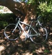 ぐりとぐらの本日も自転車日和なり