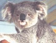 オーストラリア ベビママキッズ