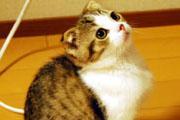 たむれな 猫の日常