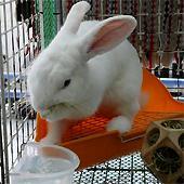 ウサギ記録・タイ記録