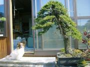 盆栽亭『英樹』