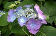 kinakoのお花は元気のビタミンブログ