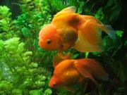 金魚とか水棲の仲間達