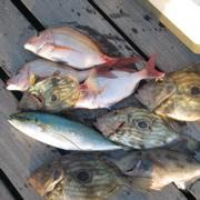 宇和海を釣る!ボート釣り釣果情報