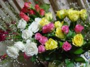 †薔薇雑貨生活†