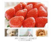 MY SWEET HONEY☆photographer Mam