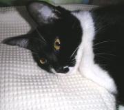 猫とイッショ