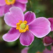 長居植物園ブログ