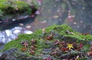 アルペンの京都散策日記